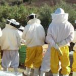 curso-apicultura-bee-garden