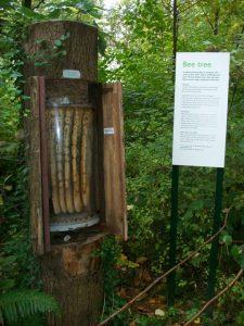 Bee Tree, en el Museo de Historia Natural de Londres