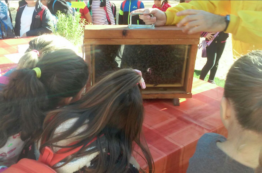colmena-observación-Bee-Garden-Málaga