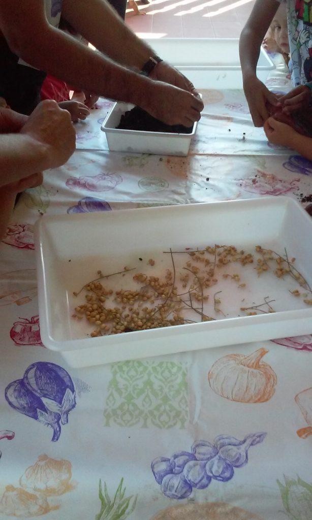 Bolas de semillas Nendo Dango Bee Garden Málaga