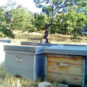 Adopta una colmena con Bee Garden Málaga