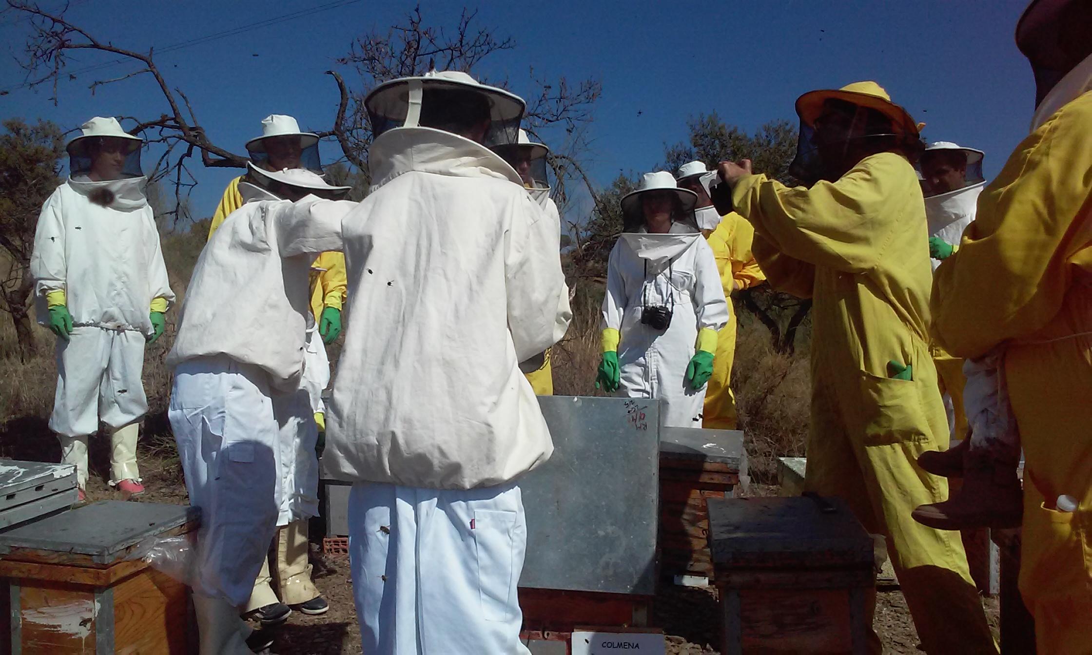 d91138f23 Visita de madrinas y padrinos a sus colmenas apadrinadas Bee Garden Málaga