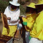 Cursos de Apicultura de 2020 con Bee Garden Málaga
