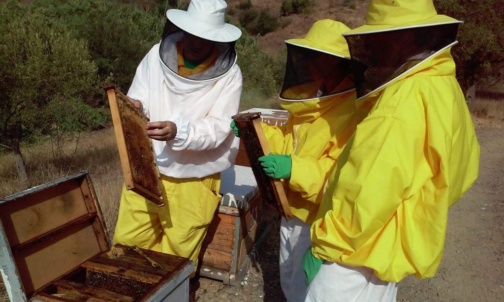Cursos Apicultura Bee Garden Málaga