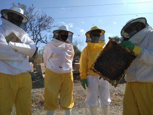 Cursos de Apicultura Bee Garden Málaga