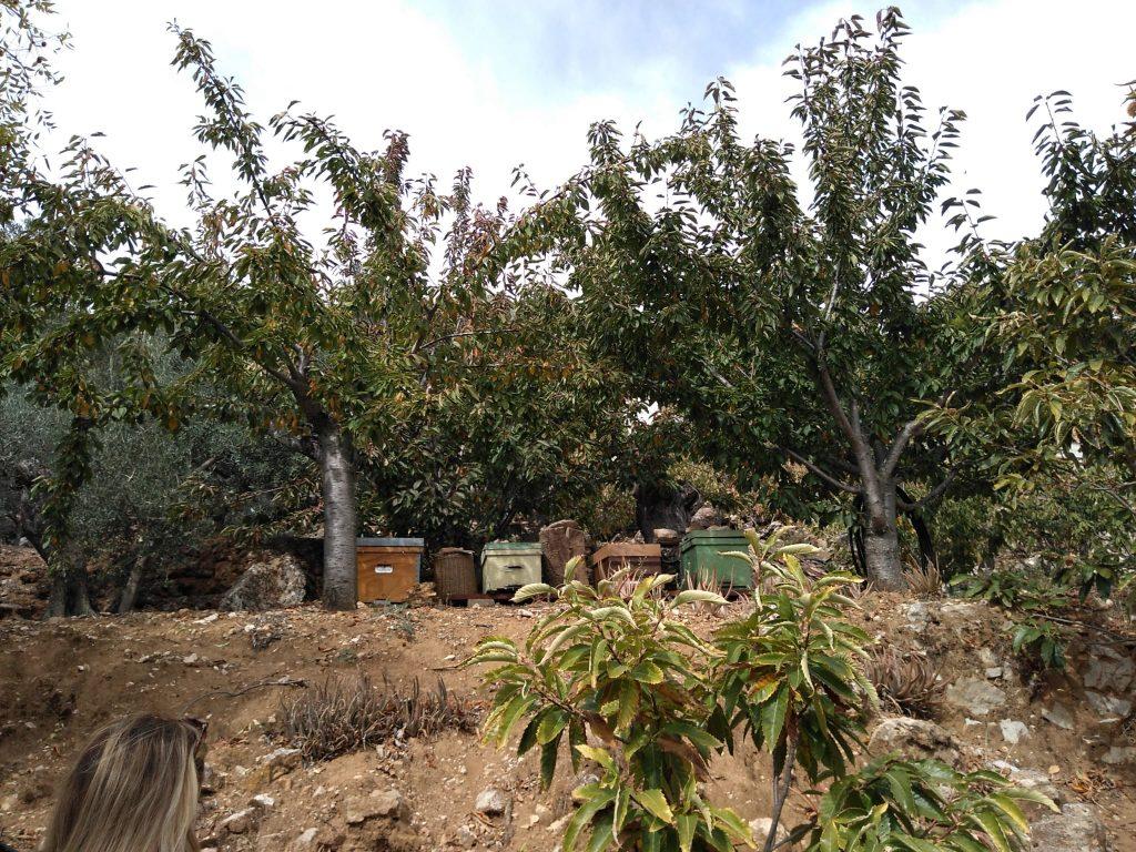 Recogida de castañas en la Sierra de las Nieves