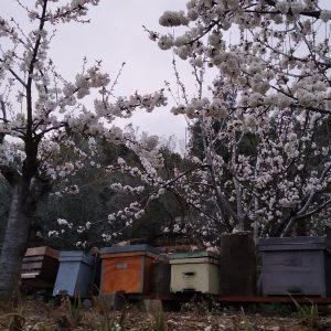 Jardín de flora melífera Bee Garden Málaga