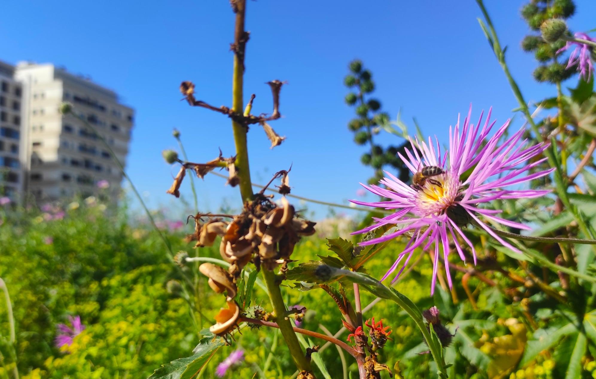 Foto ganadora del III Concurso de Polinizadores Bee Garden Málaga